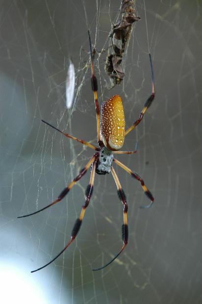 Kind of spiders in Texas??? Denton- Mtbr.com